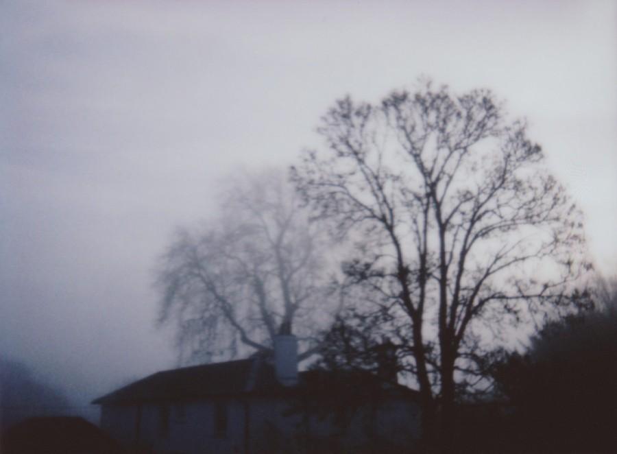 Misty tree tops